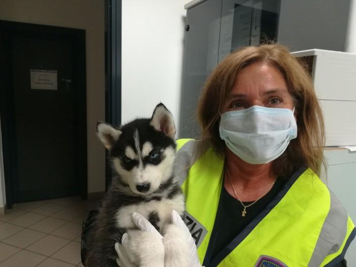 Traffico animali: aumentano sequestri in A4